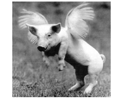 pig_with_wings_bw